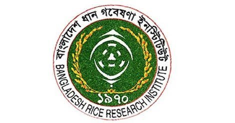 www brri gov bd job